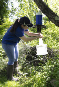 Ashley Kerekgyarto from Mosquito Control sets a mosquito trap that uses dry ice as bait.